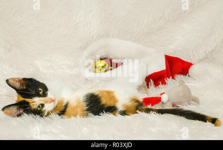 Pumpkin, a three-month-old calico cat, plays with Christmas ornaments, Dec. 26, 2014, in Coden, Alabama. - Stock Photo