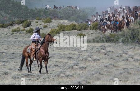Cowgirl wrangler ranch hand riding bay horse anxiously waiting to help herd hundreds of horses on annual Great American Horse Drive across sagebrush - Stock Photo