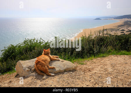 Dipkarpaz, Turkish Republic of Northern Cyprus, Cyprus - Golden Beach with cat - Stock Photo