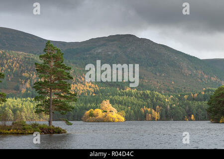 Loch an Eilein, Rothiemurchus Estate in the Cairngorm National Park in the Scottish Highlands. Taken in autumn when the tree colours are in transition - Stock Photo