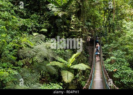 Rainforest on La Fortuna Waterfall hike, Alajuela Province, Costa Rica, Central America - Stock Photo