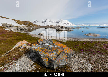 Elegant lichens cover the rocks at Gnalodden, Hornsund, Spitsbergen, Svalbard, Arctic, Norway, Europe - Stock Photo