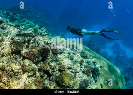 Snorkeling the pristine reefs on the remote Island of Alofi in The French Territory of Wallis and Futuna Islands, South Pacific Islands, Pacific - Stock Photo