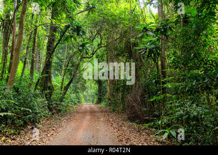 Road in the wet and deep jungle of Ko Kood island in Thailand - Stock Photo