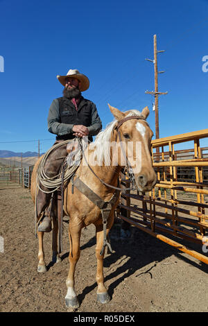 RED LODGE, MONTANA, September 21, 2018 : Mounted cowboy rassemble herd of cows to load big trucks, to conduct them to Nebraska for the winter. - Stock Photo