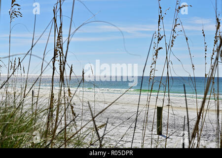 View of protected sea oats and the Gulf of Mexico along white sand or sandy Florida Gulf Coast beach in the Florida panhandle, USA. - Stock Photo