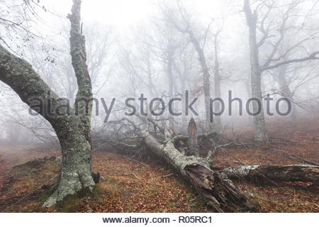 Mysterious and mystic dense forest in misty haze - Stock Photo