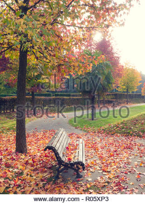 Red and yellow leafs falling on a bench in a park during fall. Colourful trees in background, little patch of grass fading into the distance. - Stock Photo