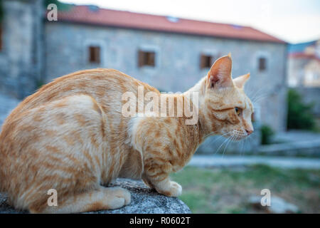 Red cat on the street of the old city in Budva. Montenegro - Stock Photo