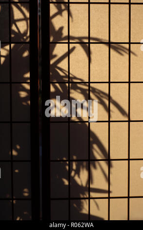 Rectangular gridwork on aJapanese rice paper or shoji screen used for privacy or room divide. It lets diffuse light in:a lady palm silhouetted outside - Stock Photo