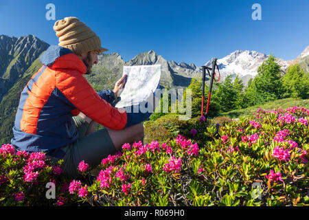 Hiker surrounded by rhododendrons looks at map, Scermendone Alp, Sondrio province, Valtellina, Rhaetian Alps, Lombardy, Italy, Europe - Stock Photo