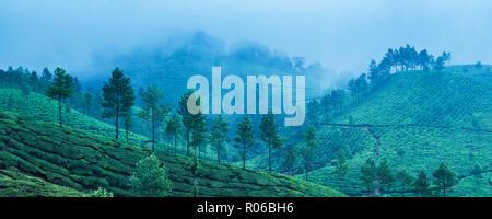 Munnar, Western Ghats Mountains, Kerala, India, Asia - Stock Photo