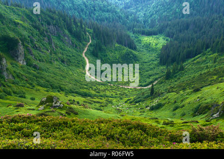 Winding road in the valley among majestic green rugged hills covered in lush grass, bushes, forest. Herd of sheep grazing in the distance. Summer day  - Stock Photo