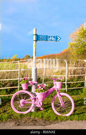 Roadside bicycle painted pink with flower display of Pink Red and White pansies on it. Elswick village Lancashire England UK - Stock Photo