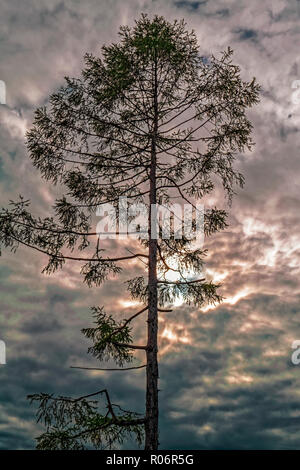 Lonely old tree against a dramatic cloudy sky - Stock Photo
