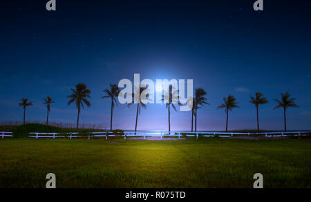 A beautiful full moon rises over a bank of coconut palm trees on Fort Lauderdale Beach. - Stock Photo