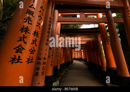 leading up the path - Stock Photo