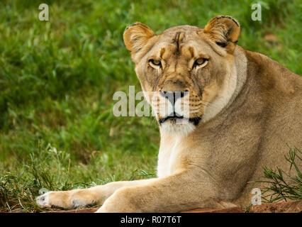 Kgalagadi Transfrontier Park, South Africa - Stock Photo