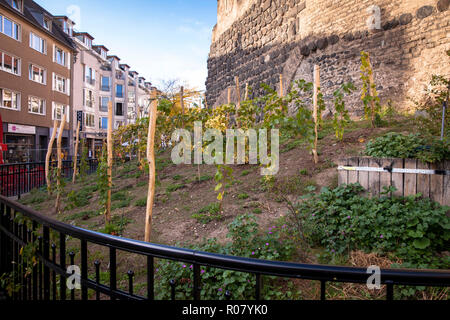 grapevine at the historic town gate Severinstorburg at the Chlodwig square in the south part of the town, Cologne, Germany.  Weinreben an der Severins - Stock Photo