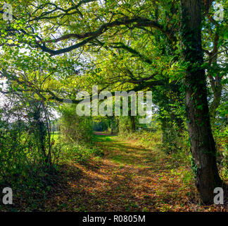Ancient Hampshire cart track in autumn light with fallen leaves and tints, Hampshire, UK - Stock Photo