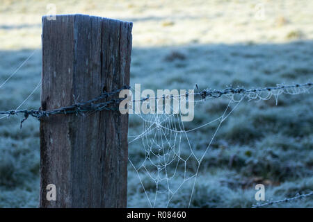 Barbed wire Fence post with frosty cobweb - Stock Photo