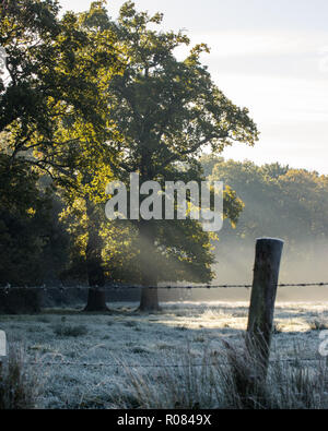 Sun rays shining through tree onto frosted meadow in winter - Stock Photo