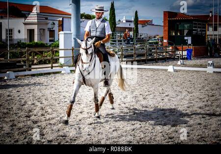 Lusitano Horse in Golega, Portugal - Stock Photo