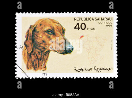 Cancelled postage stamp printed by Republic Sahrawi, that shows Sloughi dog, circa 1998. - Stock Photo