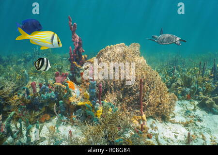 Colorful marine life in a coral reef of the Caribbean sea underwater, sea sponges with tropical fish and a turtle in background - Stock Photo