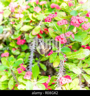 Square photo with colorful butterfly. Bug has nice wings with black and orange color. Insect is perched on plant or flower with pink blooms and many t - Stock Photo