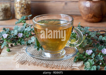 A cup of tea with fresh blooming dwarf mallow - Stock Photo