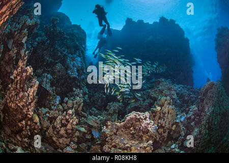 Scuba divers silhouetted in blue water background explore mountainous coral reefs in the Red Sea. September, 2018 - Stock Photo