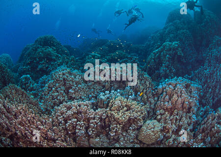 Scuba divers explore mountainous coral reef formations in the Southern Red Sea. - Stock Photo