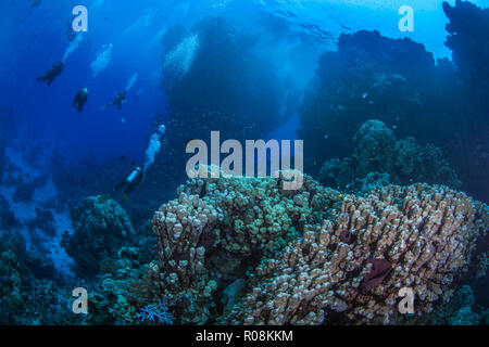 Underwater safari in the Red Sea where scuba divers explore pinnacles and mountainous coral reefs in the Fury Shoals area. September, 2018 - Stock Photo