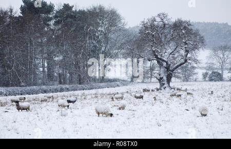 Flock of sheep in a snow storm - Stock Photo
