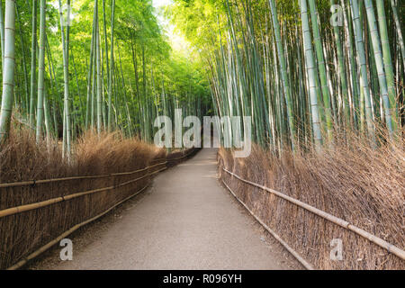 Japan travel destination landmark, Arashiyama Bamboo Forest in Kyoto