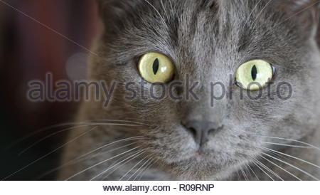 Cute Grey Cat - Stock Photo