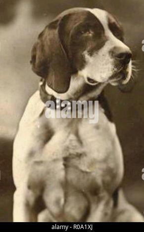 vintage photo of a dog - Stock Photo