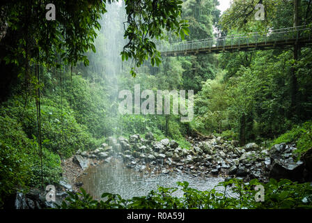 Viewpoint from behind the Crystal Shower Waterfall cascading into a pool below at Dorrigo National Park, NSW Australia. - Stock Photo