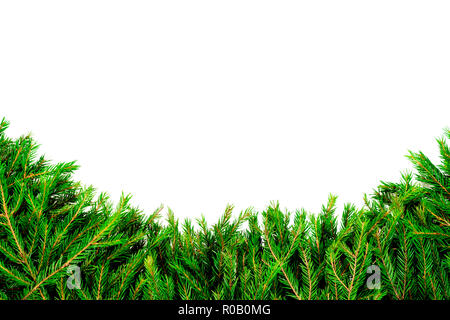 Wide Christmas border arranged with fresh fir branches isolated on white shaped as an arch - Stock Photo