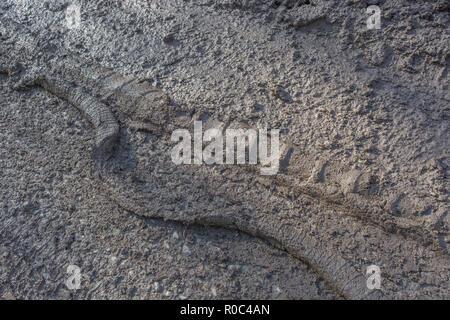 Muddy country road in autumn time. Metaphor 'stick in the mud', muddy texture, muddy surface, mud, winter season mud, muddy ground. - Stock Photo