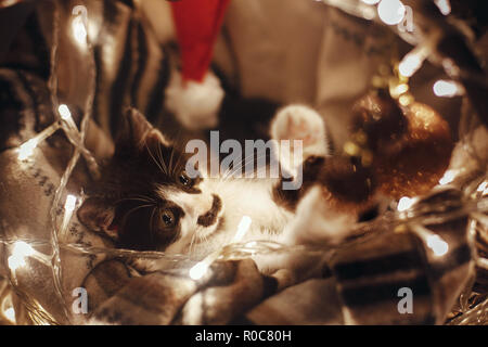 Cute kitty playing with ornaments in basket with lights under christmas tree in festive room. Adorable funny kitten with amazing eyes. Merry Christmas - Stock Photo