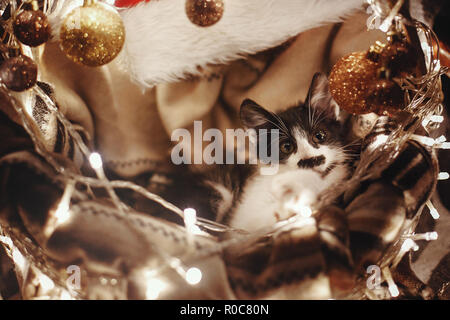 Cute kitty sitting in basket with garland lights under christmas tree in rustic room. Adorable funny kitten with amazing eyes. Merry Christmas concept - Stock Photo