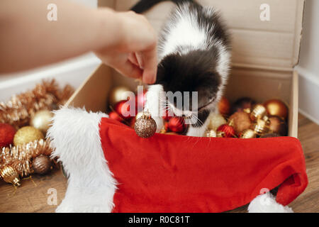 Hand playing with cute kitty at box with red and gold baubles, ornaments and santa hat under christmas tree in festive room. Merry Christmas concept.  - Stock Photo