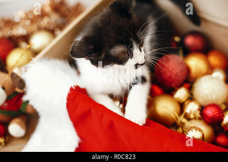Cute kitty sitting in box with red and gold baubles, ornaments and santa hat under christmas tree in festive room. Merry Christmas concept. Adorable f - Stock Photo
