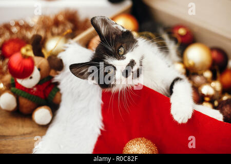 Cute kitty playing with red and gold baubles in box, ornaments and santa hat under christmas tree in festive room. Merry Christmas concept. Adorable f - Stock Photo