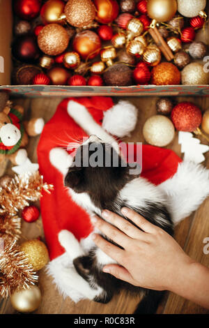 Hand caressing cute kitty at box with red and gold baubles, ornaments and santa hat under christmas tree in festive room. Merry Christmas concept. Ado - Stock Photo