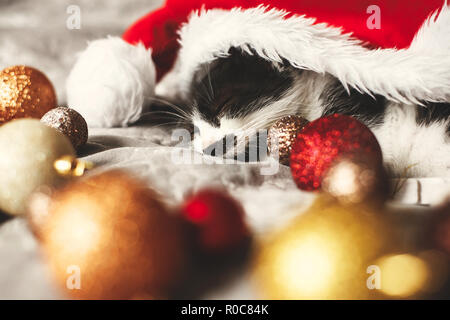 Merry Christmas concept. Cute kitty sleeping in santa hat on bed with gold and red christmas baubles in festive room. Atmospheric image. Season's gree - Stock Photo