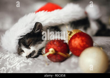 Cute kitty sleeping in santa hat on bed with gold and red christmas ornaments in festive room. Merry Christmas concept. Adorable funny kitten napping. - Stock Photo