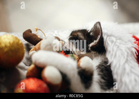 Cute kitty sleeping in santa hat on bed with gold and red christmas baubles in festive room. Merry Christmas concept. Adorable kitten napping with rei - Stock Photo